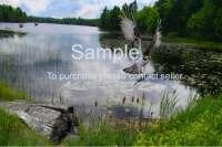 "20"" X 30"" Canvas Wilderness  Osprey fishing scene"
