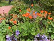 Perennial Flowering Plants and Shrubs